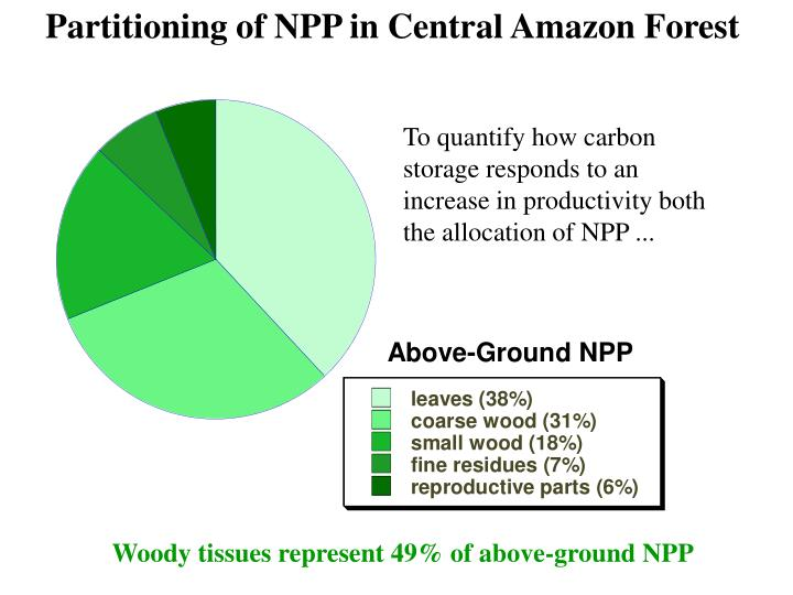 Partitioning of NPP in Central Amazon Forest