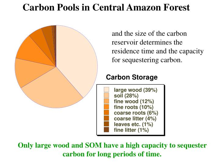 Carbon Pools in Central Amazon Forest