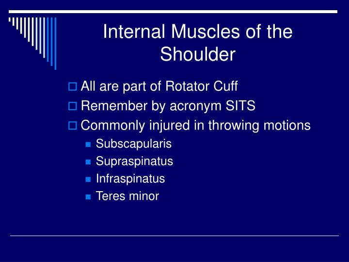 Internal Muscles of the Shoulder