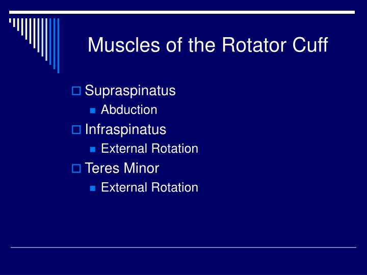 Muscles of the Rotator Cuff