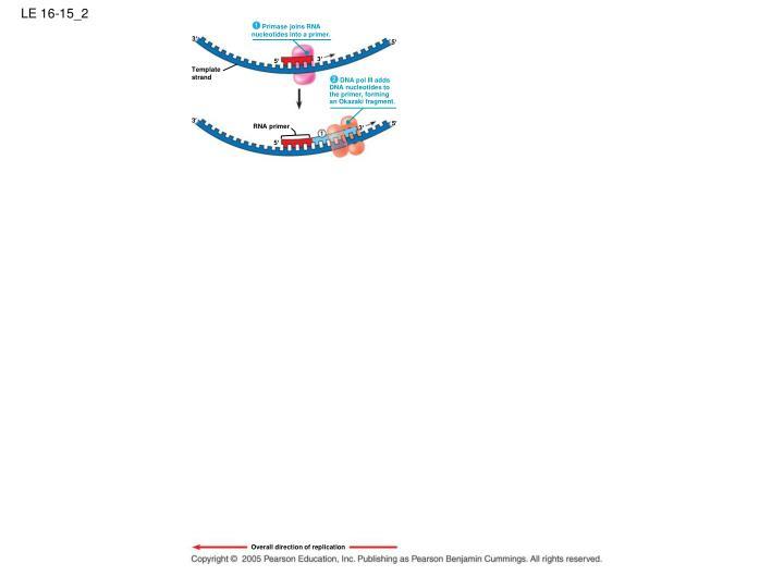 Primase joins RNA