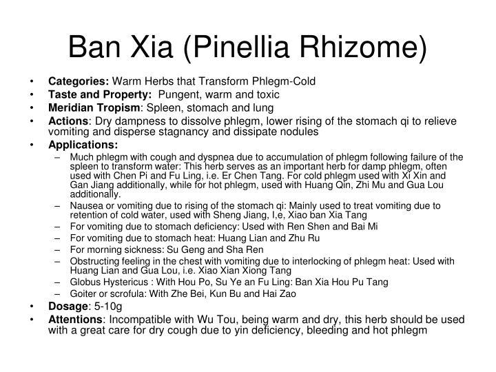 Ban Xia (Pinellia Rhizome)