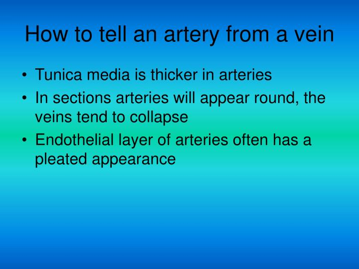How to tell an artery from a vein