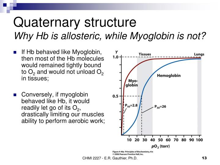 If Hb behaved like Myoglobin, then most of the Hb molecules would remained tightly bound to O