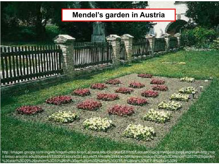Mendel's garden in Austria