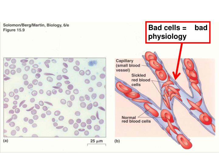 Bad cells =    bad physiology