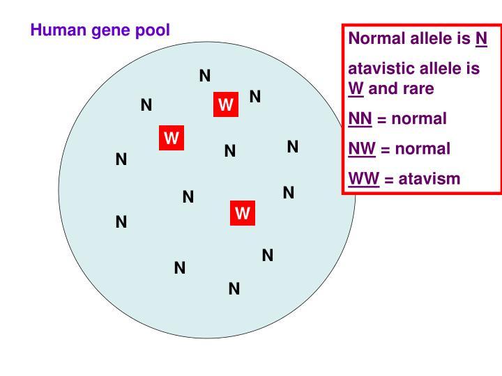 Human gene pool
