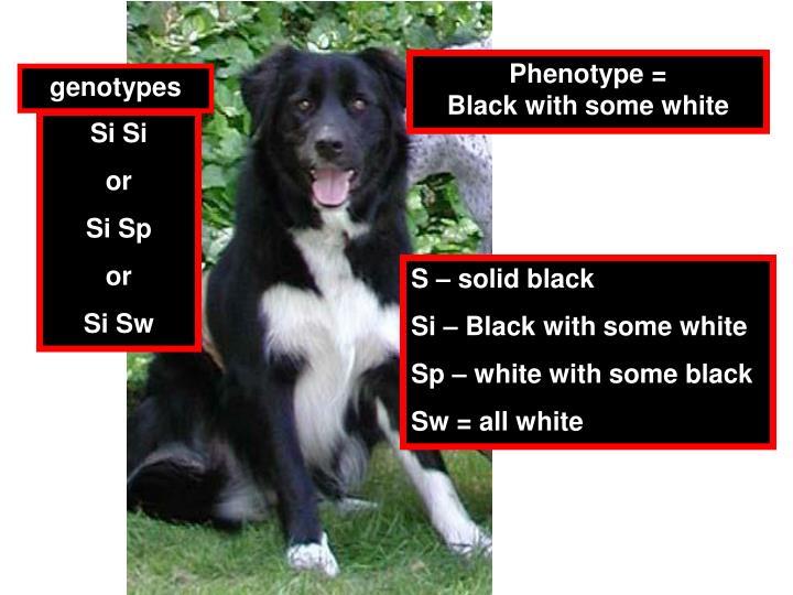 Phenotype =