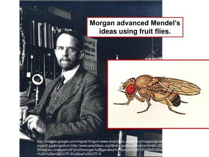 Morgan advanced Mendel's ideas using fruit flies.