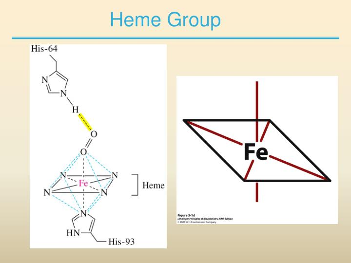 Heme Group