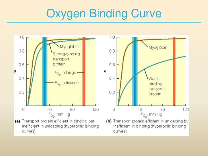 Oxygen Binding Curve