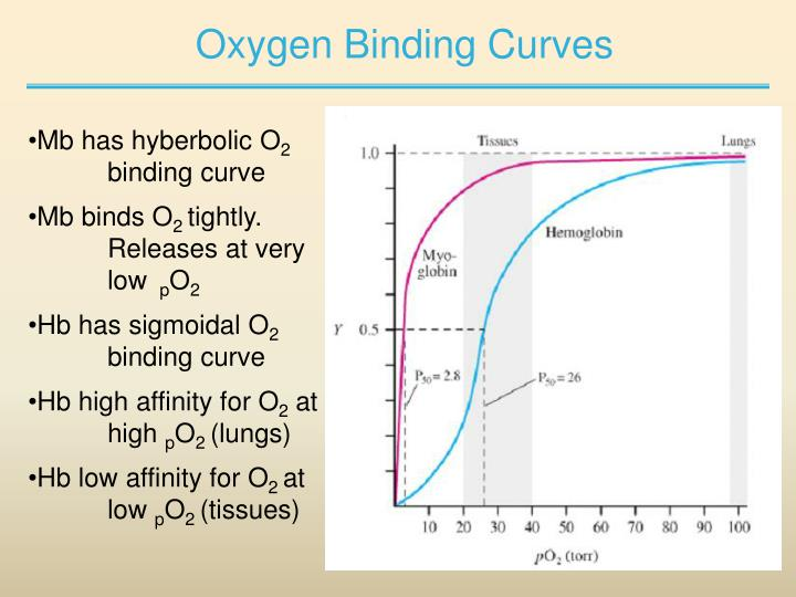 Oxygen Binding Curves