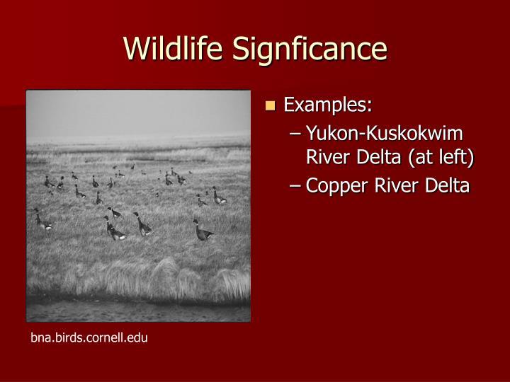 Wildlife Signficance