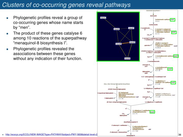 Clusters of co-occurring genes reveal pathways
