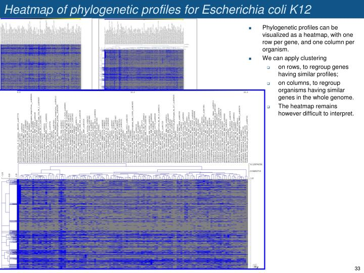 Heatmap of phylogenetic profiles for Escherichia coli K12 MG1665