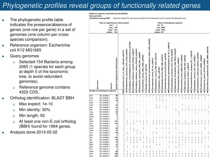 Phylogenetic profiles reveal groups of functionally related genes