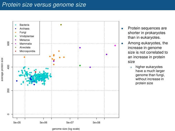 Protein size versus genome size