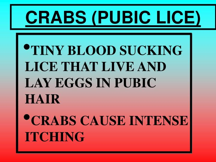 CRABS (PUBIC LICE)