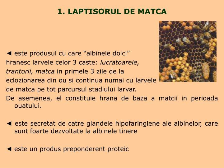 1. LAPTISORUL DE MATCA