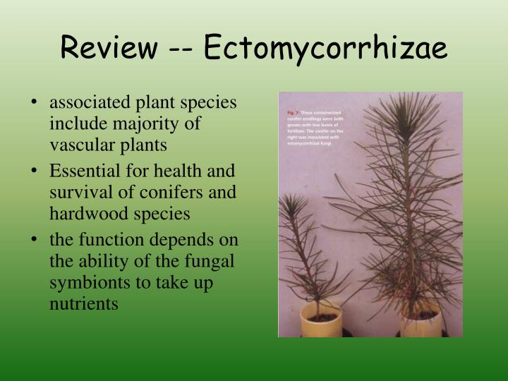 Review -- Ectomycorrhizae