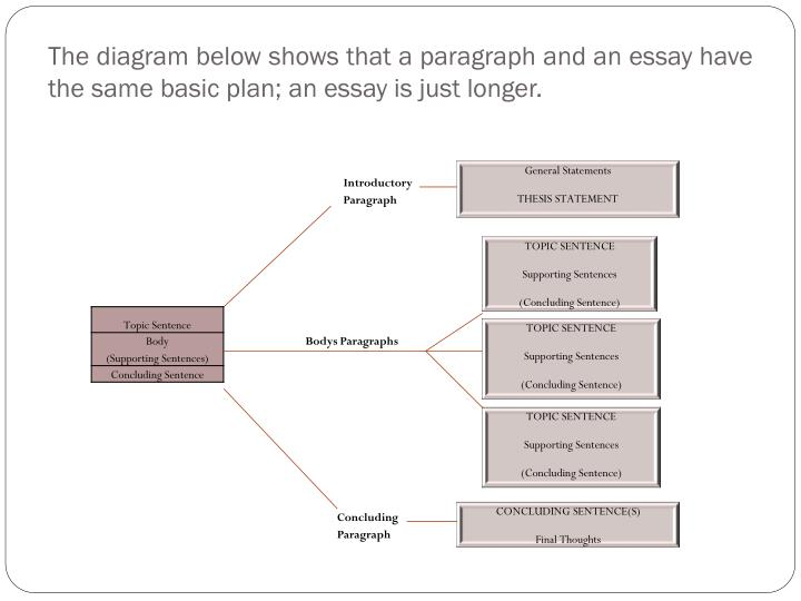 The diagram below shows that a paragraph and an essay have the same basic plan; an essay is just longer.