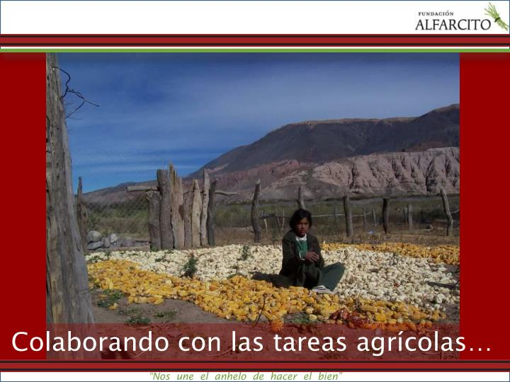 Colaborando con las tareas agrícolas…