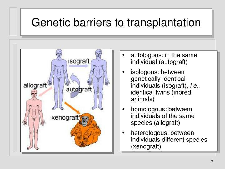 Genetic barriers to transplantation
