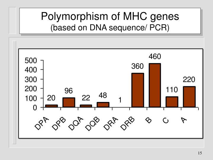 Polymorphism of MHC genes