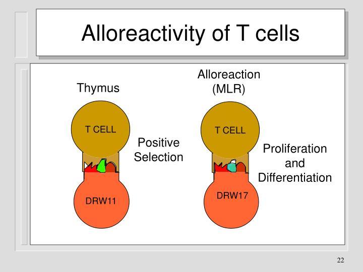 Alloreactivity of T cells