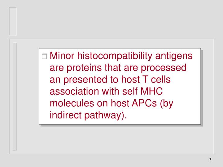 Minor histocompatibility antigens are proteins that are processed an presented to host T cells association with self MHC molecules on host APCs (by indirect pathway).