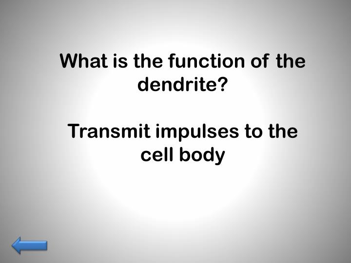 What is the function of the dendrite?