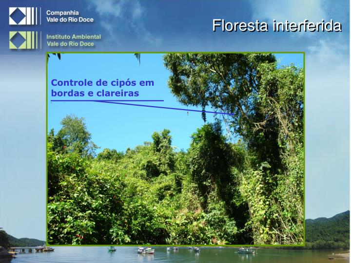 Floresta interferida