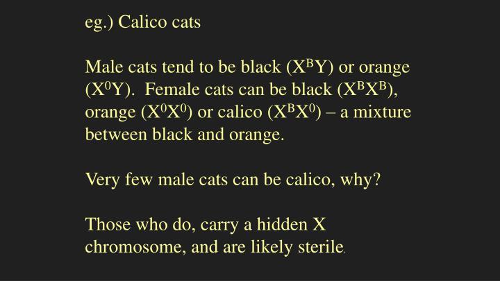 eg.) Calico cats