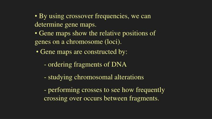 By using crossover frequencies, we can determine gene maps.