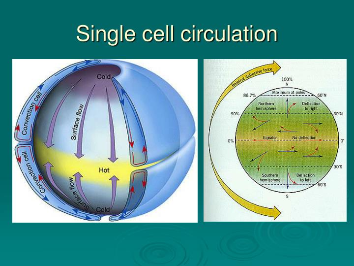 Single cell circulation
