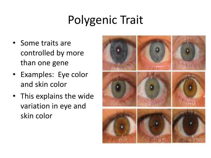 Polygenic Trait