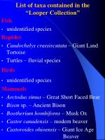 list of taxa contained in the looper collection