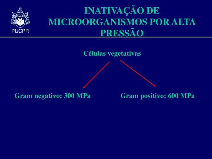 Gram negativo: 300 MPa