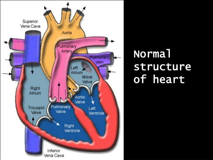 Normal structure of heart