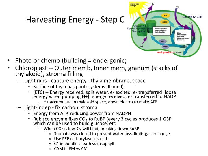 Harvesting Energy - Step One  (-synthesis)