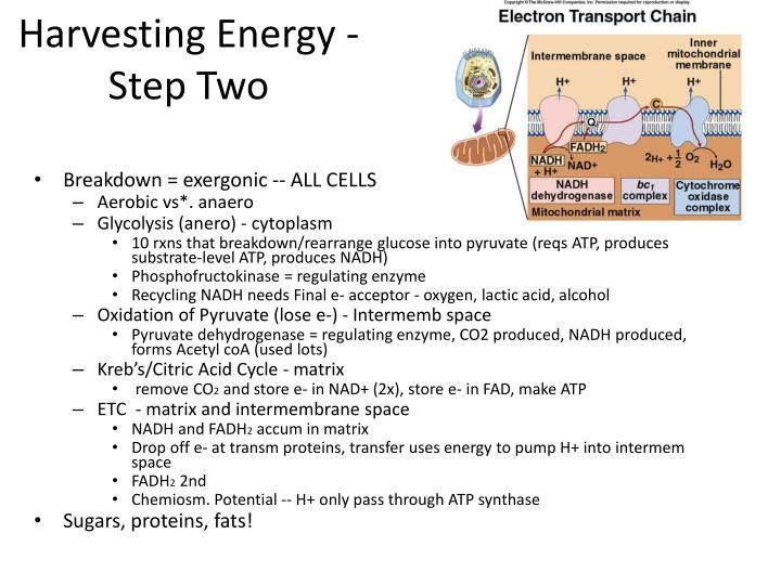 Harvesting Energy - Step Two