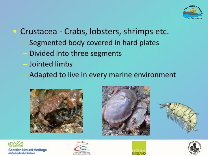 Crustacea - Crabs, lobsters, shrimps etc.