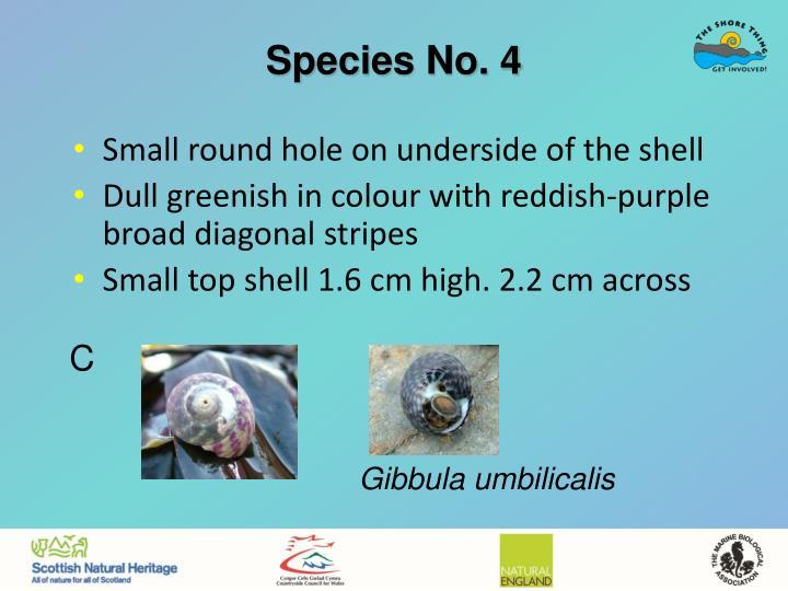 Species No. 4