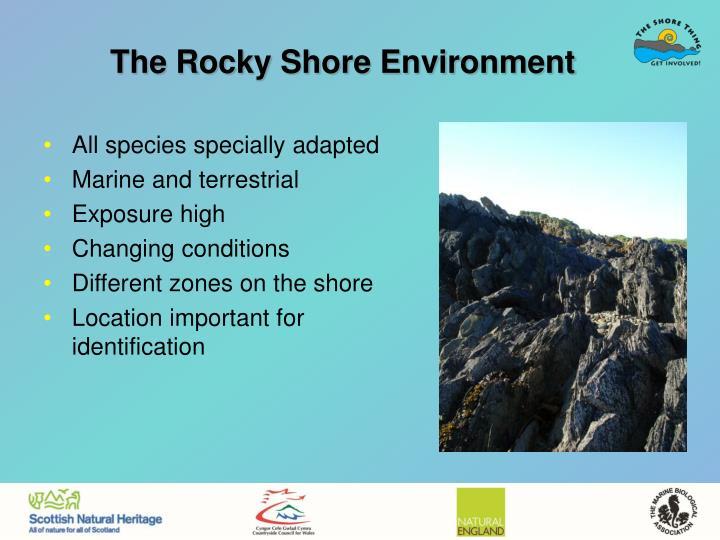 The Rocky Shore Environment