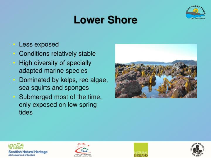 Lower Shore