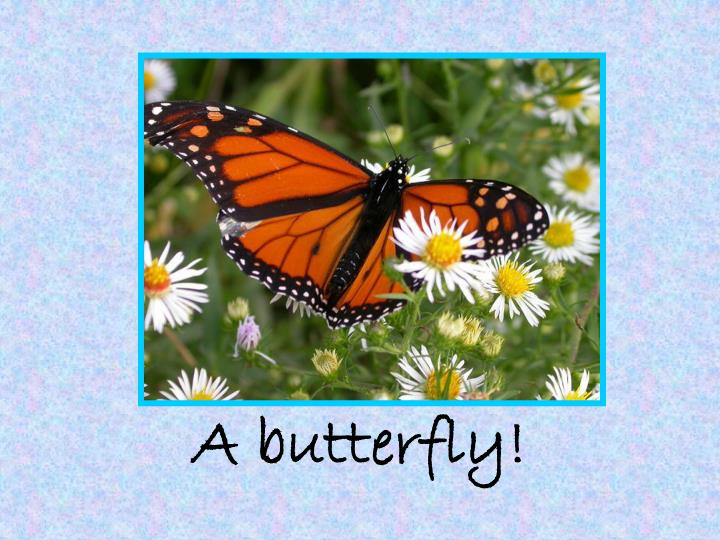 A butterfly!