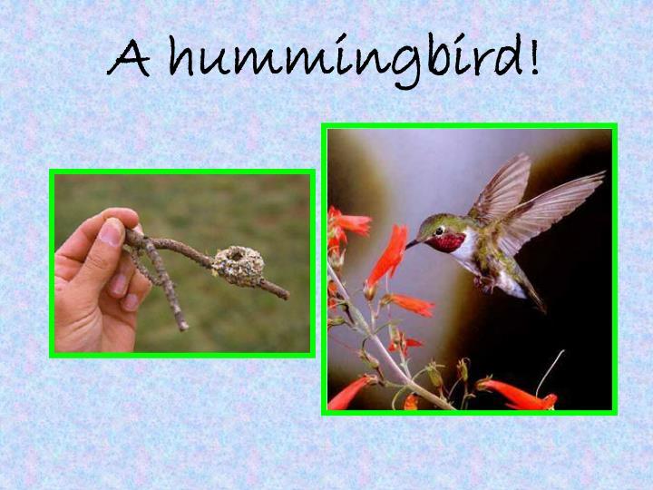 A hummingbird!