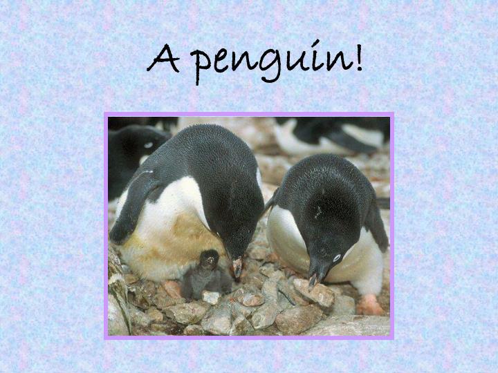 A penguin!