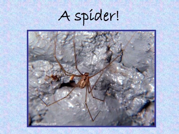 A spider!