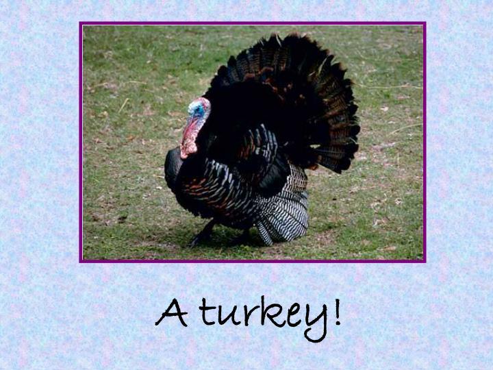A turkey!
